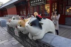 北京故宮御貓雕像萌翻女遊客 成打卡新聖地
