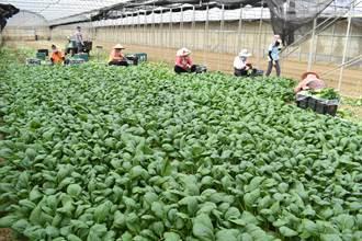 有機耕作示範觀摩 專家授種好菜撇步農民取經