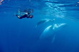 拍攝從空中到水下 《男人與他的海》集資拚上映