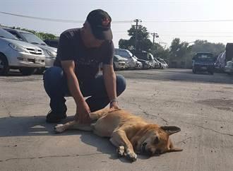 高雄流浪犬遭彈弓襲擊重傷 救援小組趕往醫治