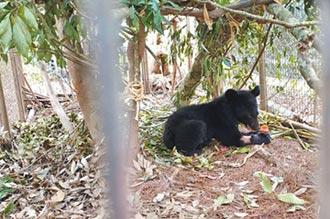視為一分子 利稻小熊就叫Litu