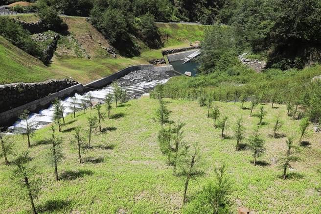 必坦溪沿線邊坡遍植喬木綠樹,加速植生復育。(東勢林管處提供/王文吉台中傳真)