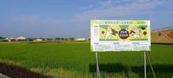 台南市好米季人潮爆多 ㄇㄚˊ幾兔功勞不小