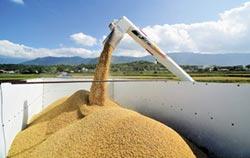 二期稻作正常收購 台東縣府掛保證