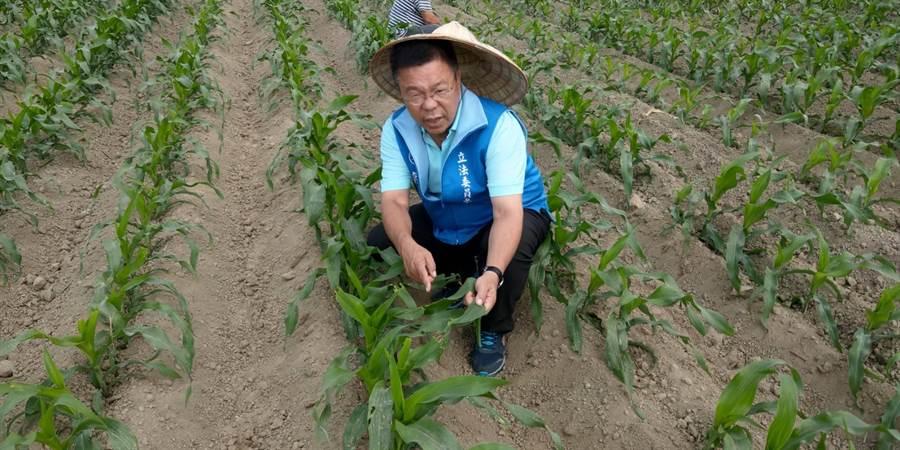 台南農民向蔡育輝反應秋行軍蟲肆虐,防疫補助不足。(翻攝照片/劉秀芬台南傳真)