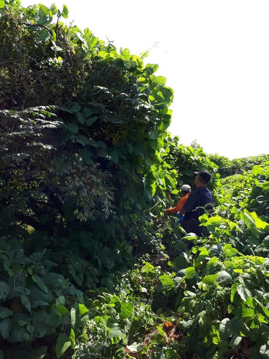 無名屍曝屍地點偏僻,警方鑑識人員(藍衣者)跟著李姓墓園工人(橘衣者)穿過樹叢才找到屍體。(翻攝照片/程炳璋台南傳真)
