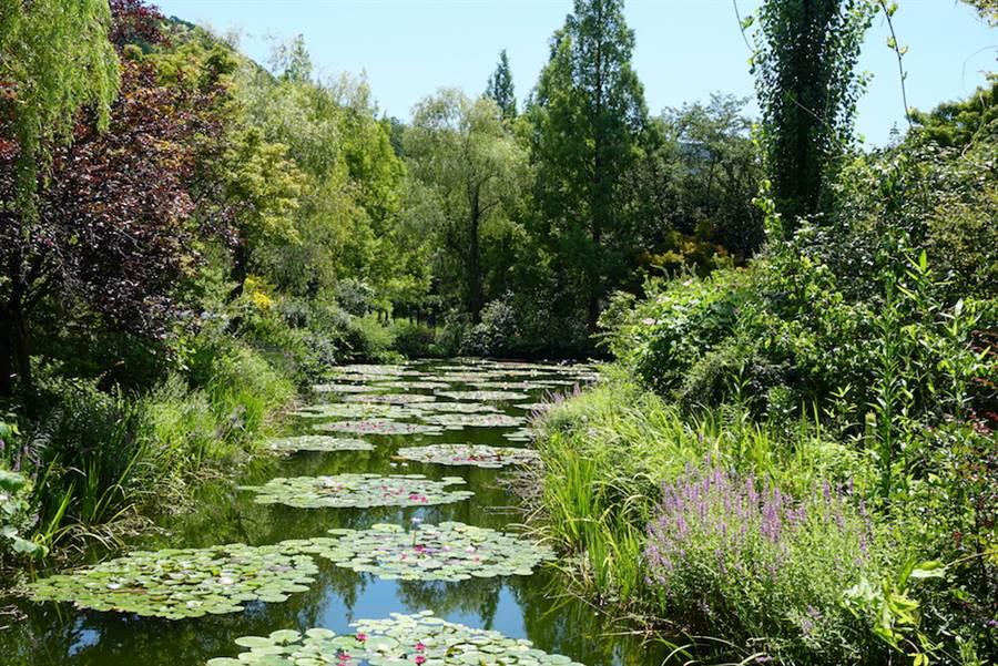 日本北川村莫內庭園的一池睡蓮真實重現法國莫內庭園的風情。(黃菁菁攝於2019年8月)