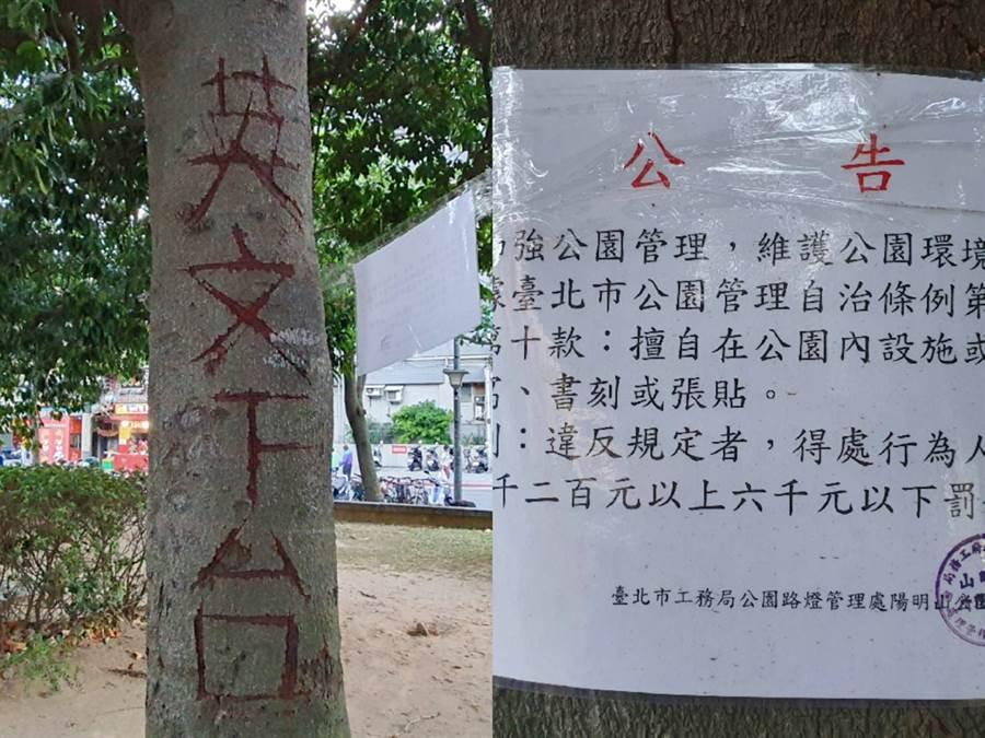 北投大豐公園樹木遭人惡意刻畫。(照片/游定剛 拍攝)