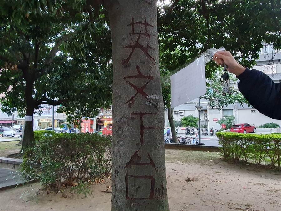 北投大豐公園內大樹遭刻畫「英文下台」等字眼。(照片/游定剛 拍攝)