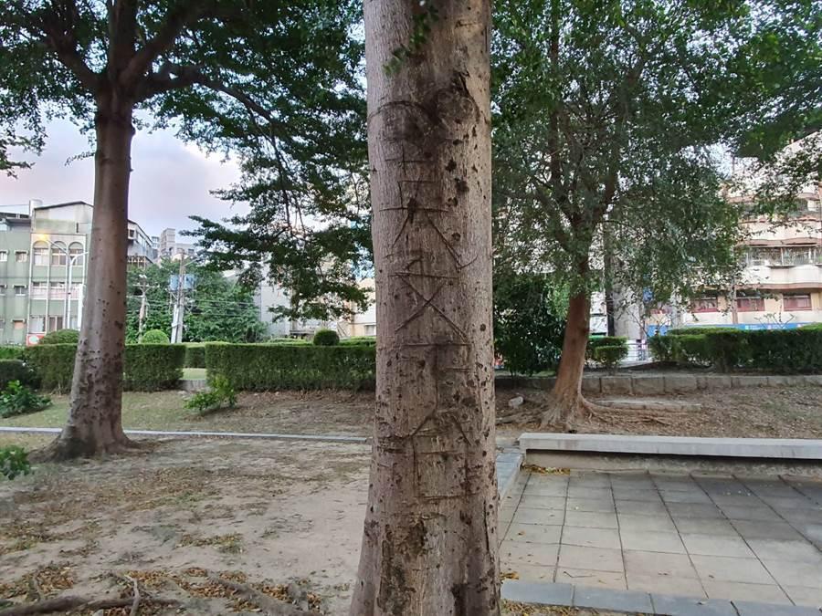 北投大豐公園多棵大樹遭人惡意刻畫「英文下台」等字眼。(照片/游定剛 拍攝)