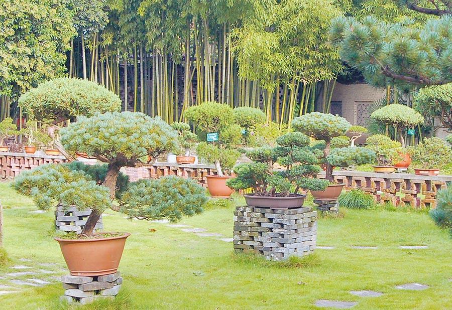 如派盆景──中國七大盆景流派之一。(南通市提供)