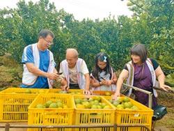 果農捐椪柑義賣 家扶暖助採收