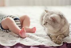 嬰兒學爬直衝陡梯 愛貓驚險神救援