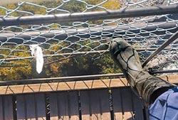 奧萬大墜橋 遊樂區經理交保