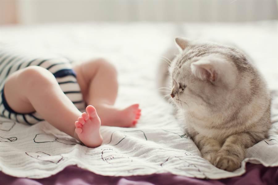 嬰兒學爬直衝陡梯 愛貓驚險神救援(示意圖/達志影像)