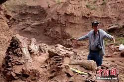 甘肅永靖再次發現巨型恐龍骨骼化石