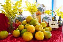 520元暢遊新社花海 體驗採橘還包養生餐