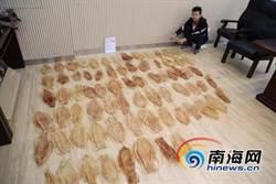陸海關破獲 瀕危加利福尼亞灣石首魚魚鰾走私案