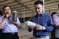 台灣菇產業每況愈下 江啟臣訪菇農傾聽心聲