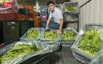 甩掉米蟲標籤!公務員推有機營養午餐 新北市630所學校受惠