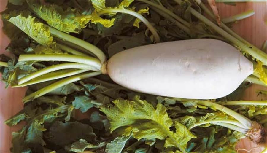 白蘿蔔有「平民人參」的美名,根莖葉都能吃。(圖/pixabay)