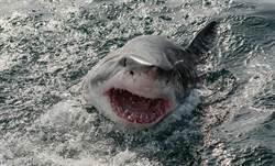 捕到30公斤鯖魚 下秒鯊躍起搶食