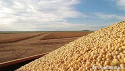 大陸研發的新品種大豆「合農71」創每畝單產紀錄