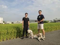 南投僅一家寄養家庭 導盲犬協會鼓勵民眾加入