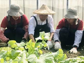 韓國瑜訪拙茁莊園 當一日農夫