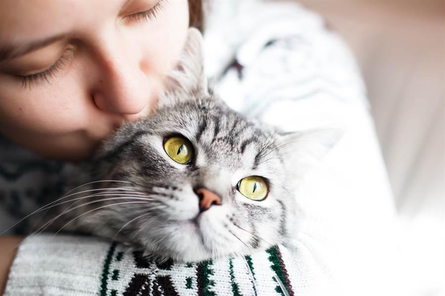 女老闆超曖昧對話,原來是在跟貓咪玩啦!(達志影像/shutterstock提供)