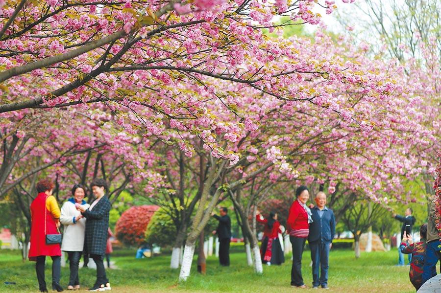 民眾在衡陽市高新區太陽廣場賞花拍照。(新華社)