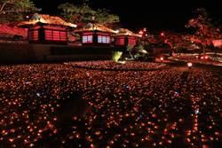 四重溪溫泉季點燈引爆火紅熱潮 滿山谷「落葉秋風」浪漫破表