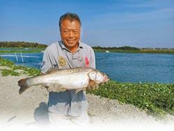 生態養殖七星鱸 征服日本市場