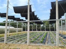 農產為本、綠能加值 智慧農耕攜手太陽能光電