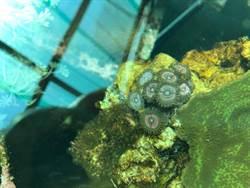 他為「站著浮潛」養珊瑚 養了4大缸後新夢想是這個