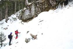 山林開放 雪霸處雪季服務1月3日起開辦