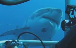 「鯊」出血路!Discovery《鯊魚週》曝最危險的真人實驗