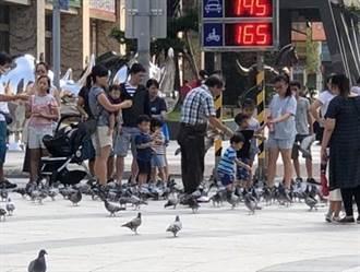 鴿害衍生問題多 市府擬設驅鳥設施
