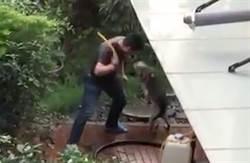 台中飼主持水管虐狗20秒狂鞭18下 淒厲聲傳遍社區