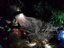 竹南男子砍樹 慘遭巨木壓斃