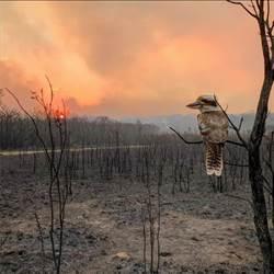 澳洲野火延燒昆士蘭 消防直升機救火期間墜毀