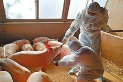 非洲豬瘟肆虐 提煉藥肝素短缺
