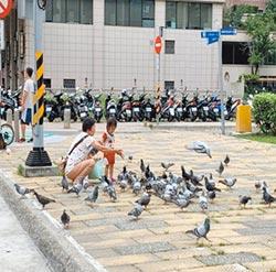 鴿害問題多 桃市擬設驅鳥設施