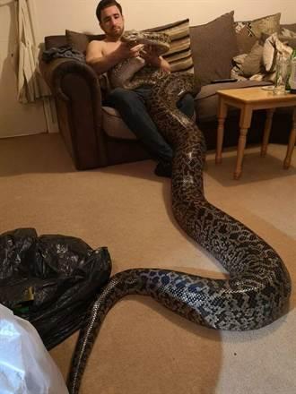 驚呆了!世界第一巨蟒長6公尺 比男人「那裡」還粗