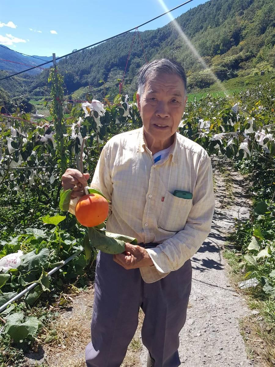 高齡90歲的空軍楊賜詩爺爺在梨山的環山部落種甜柿將近40年。(圖/洪勝雄提供)
