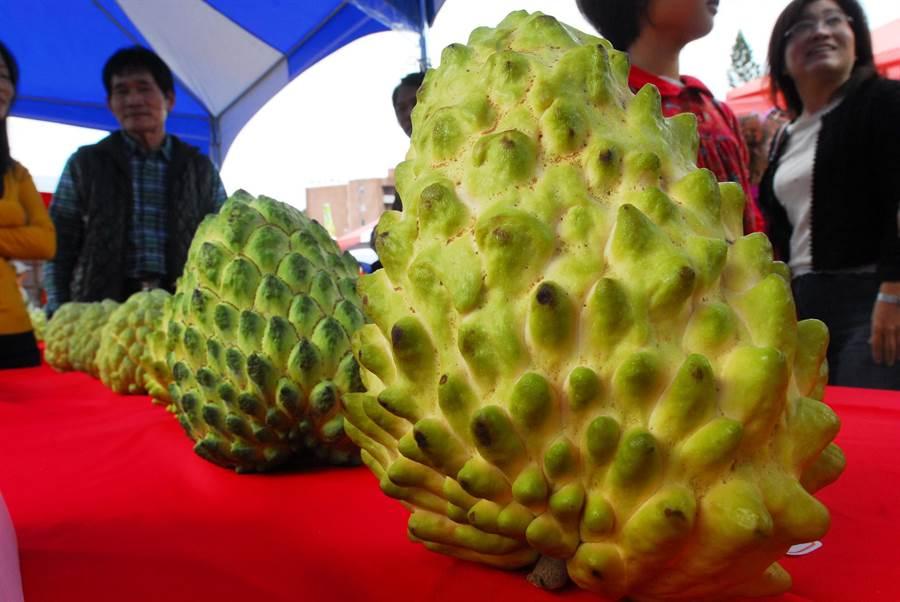 鳳梨釋迦是台東重要經濟作物,每年銷往中國大陸產值破10億元。(莊哲權攝)