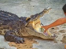 女童遭巨鱷狠咬 15歲兄驚險神救援