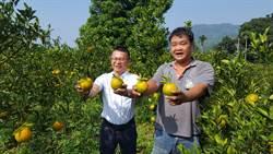 青農返鄉單打獨鬥虧4年 加入產銷班後終於賺錢了