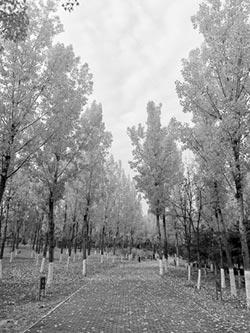 北京郊區公園