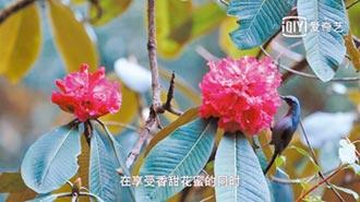 中國植物影響世界 紀錄片唯美